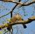 pigeons-50005_1280